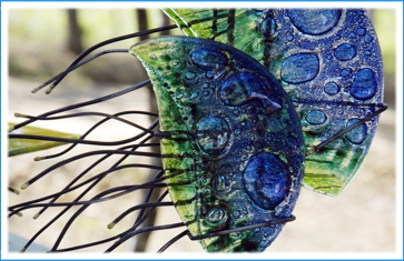INDIGO GLASS ART